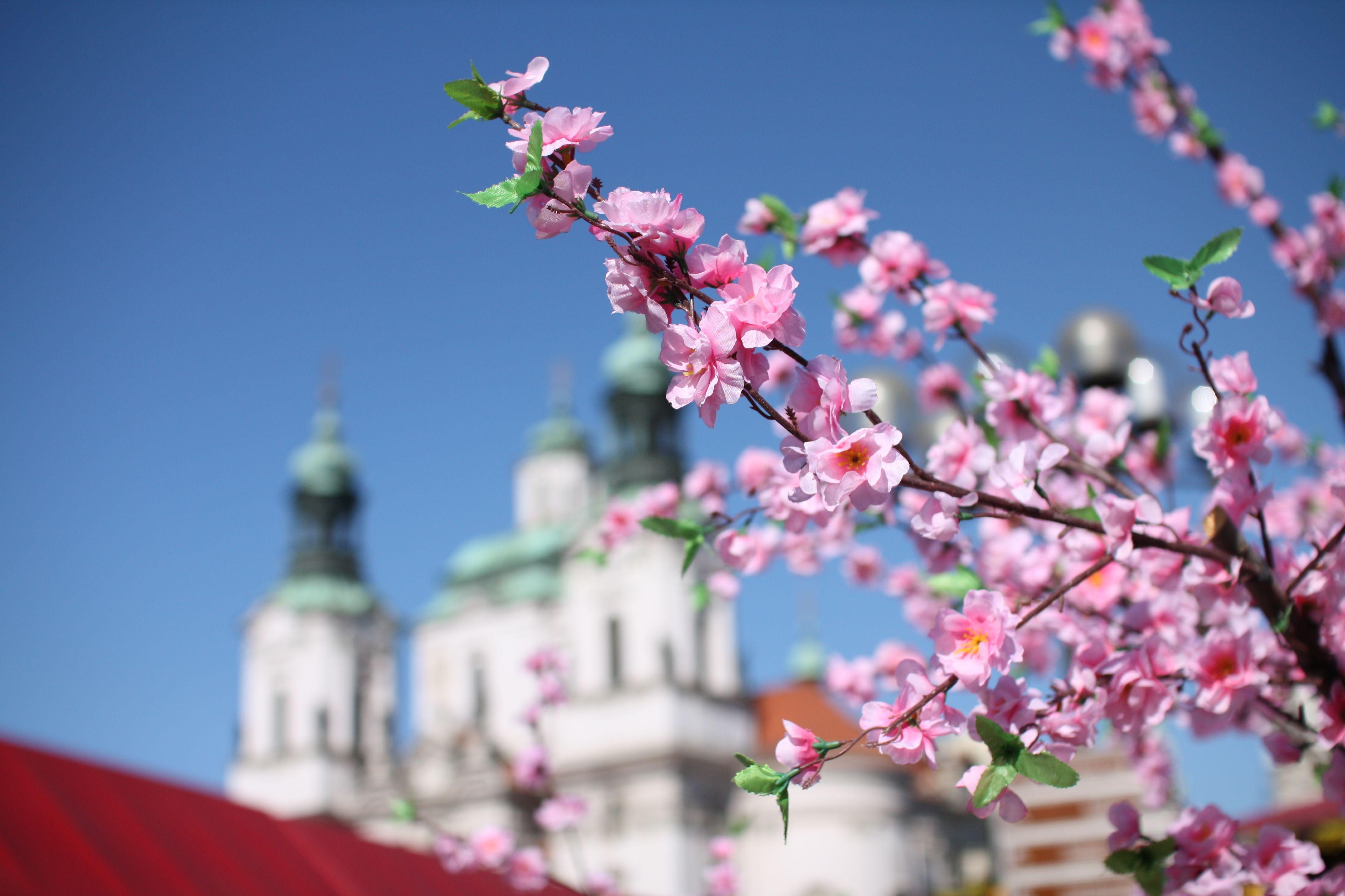 Pasqua fiori