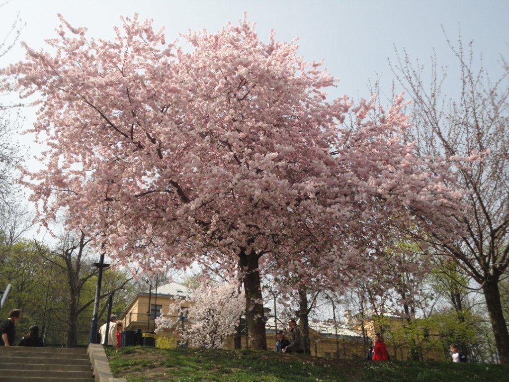 Primavera alberi 3