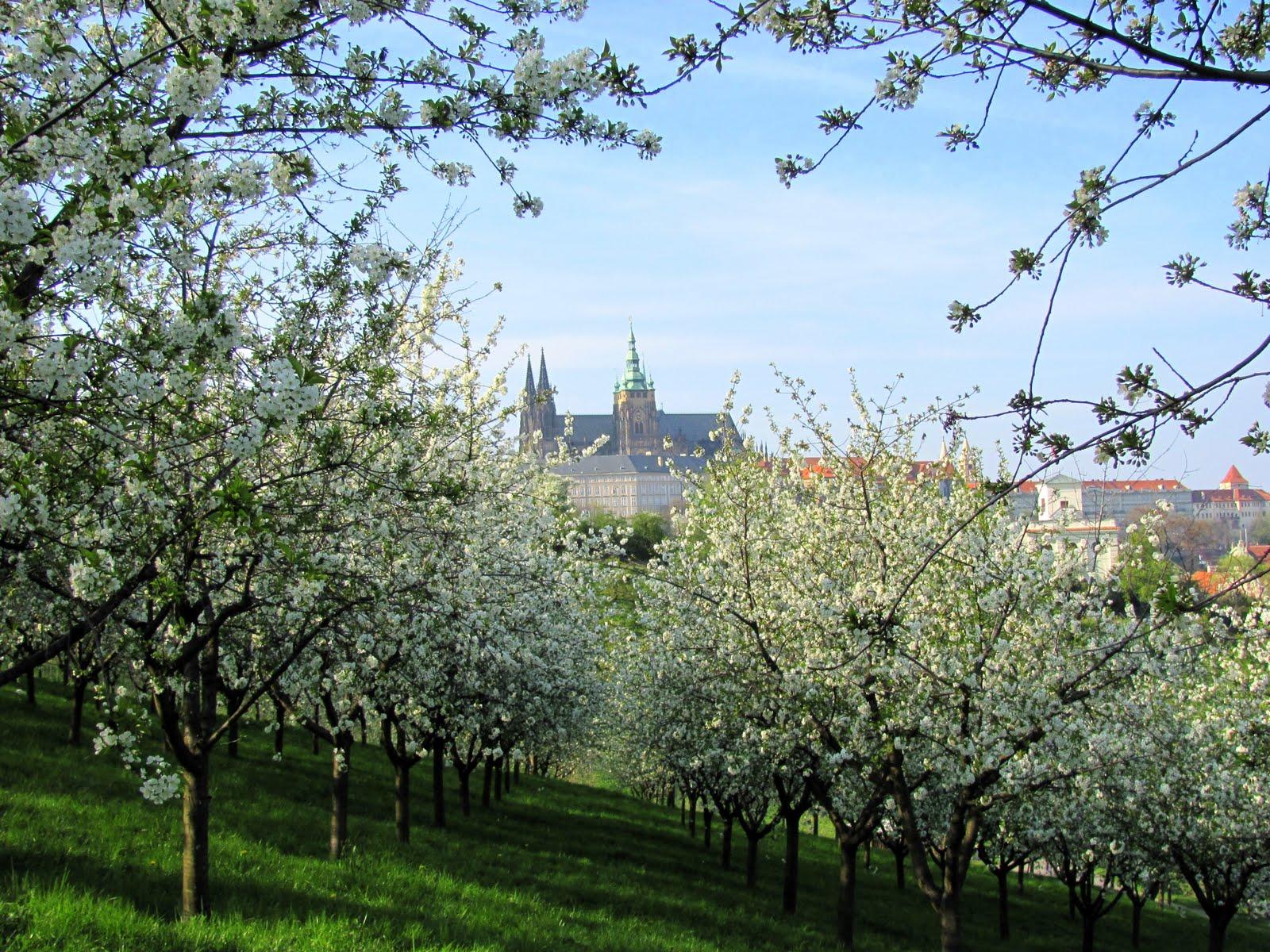 Primavera alberi