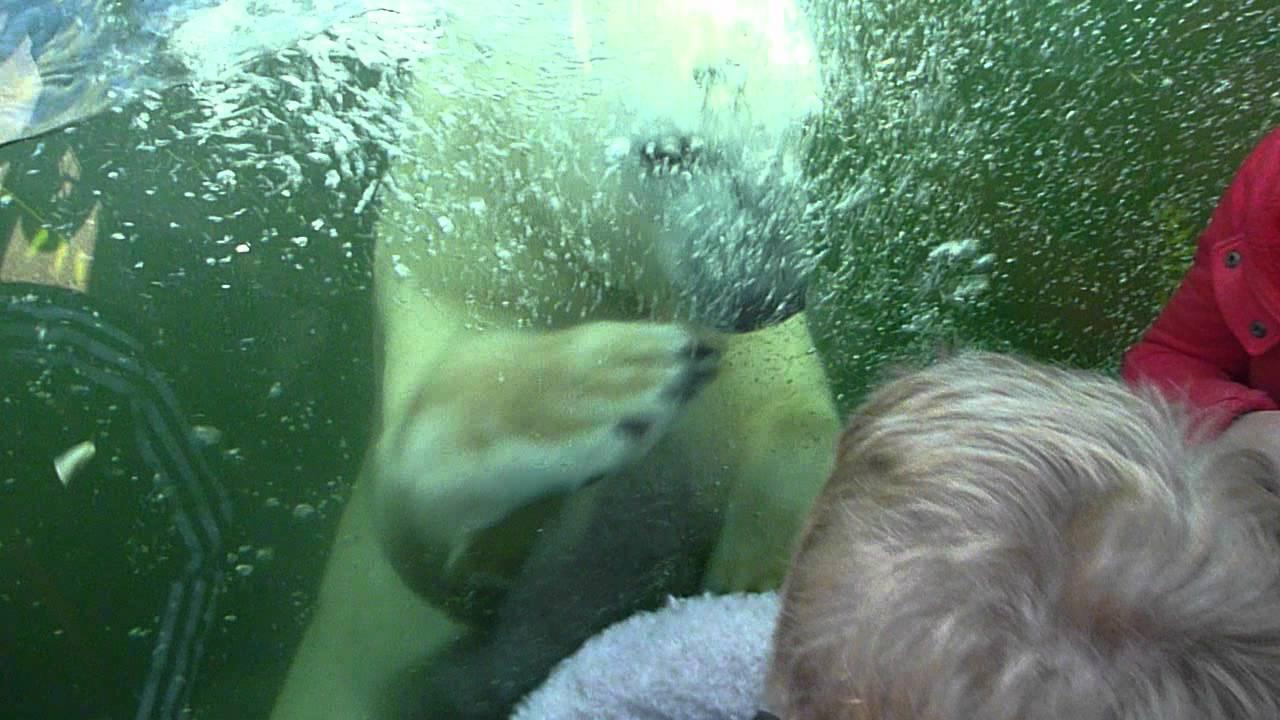 Zoo orso