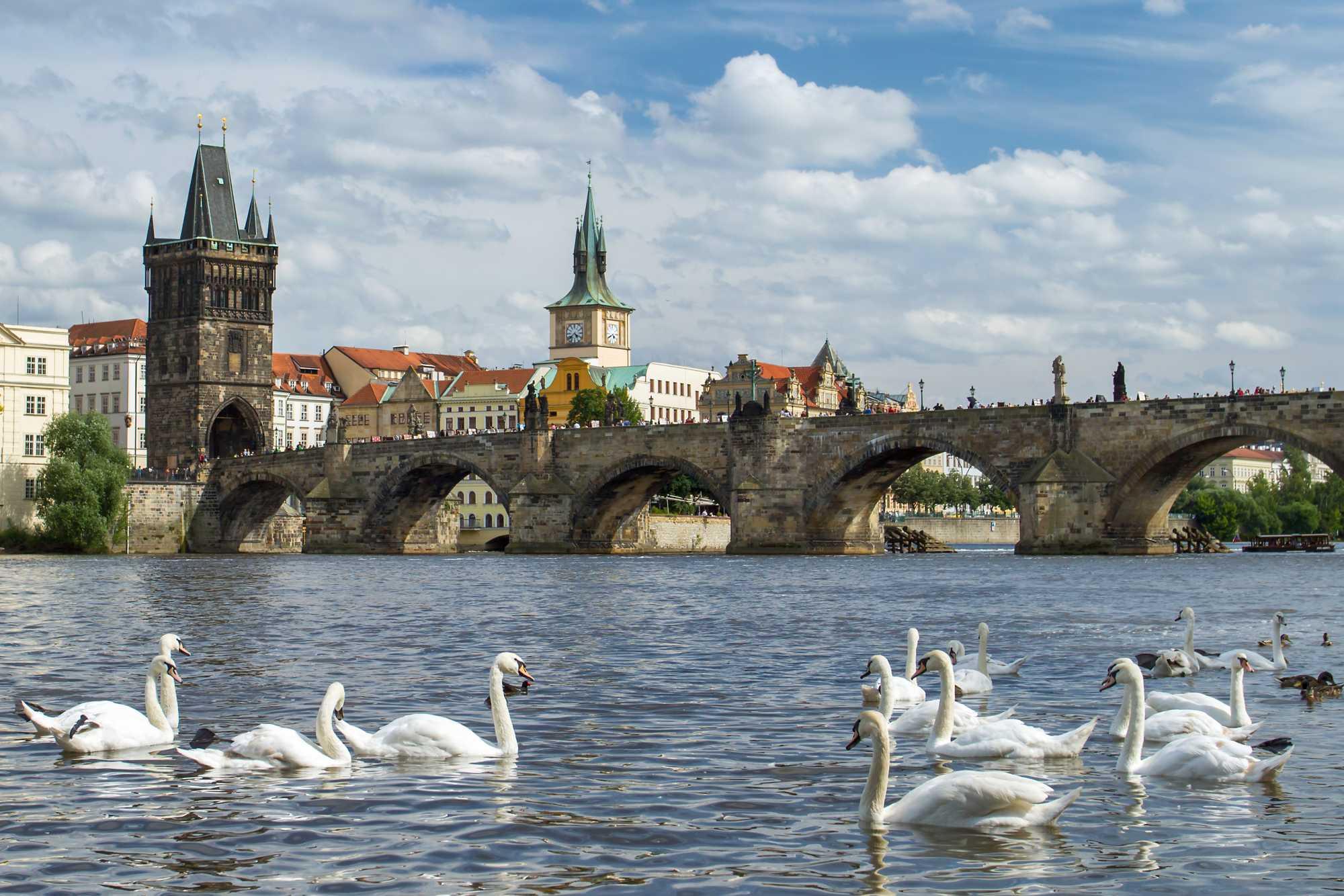 prague-river-swans