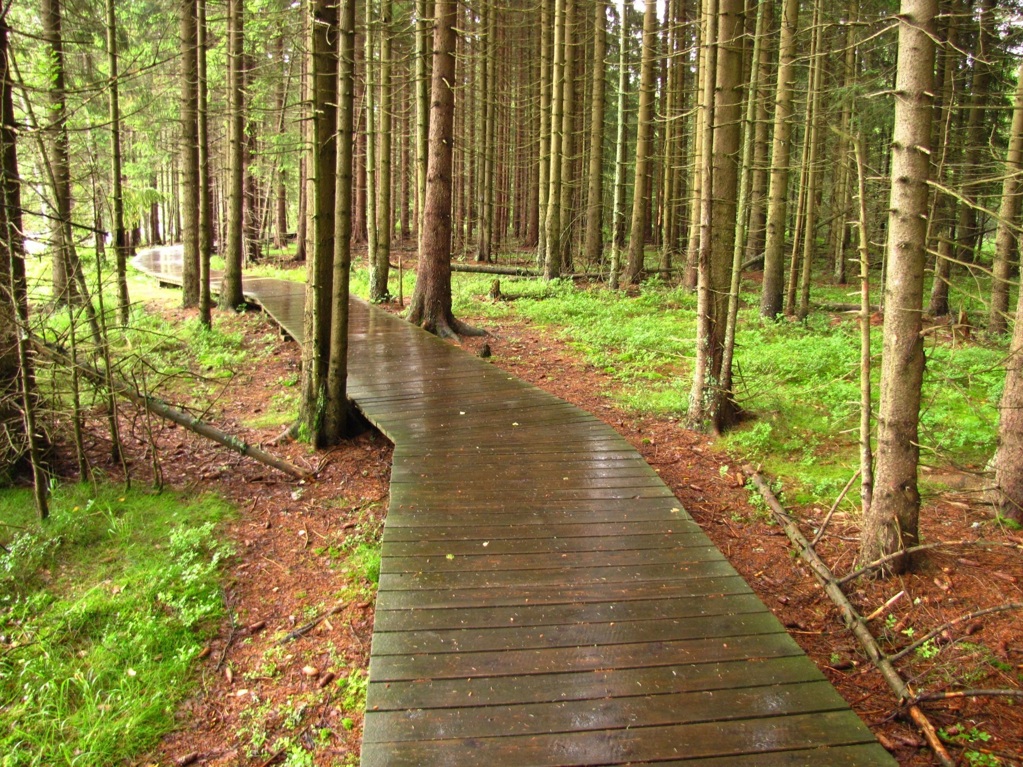 Kladska path