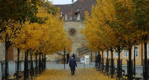 Oro e argento colorano l'autunno