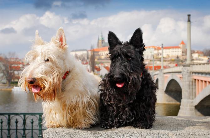 Vacanza a Praga con il cane: facilissimo!